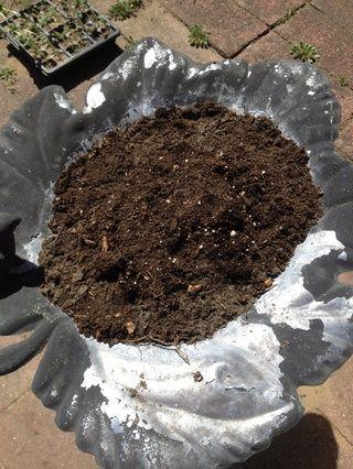 Mezcle media del suelo con cuarto de componer y cuarto de estiércol y colocar la mezcla en el baño del pájaro