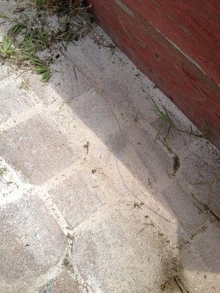 Ahora empuje el ladrillo a través hasta que las malas hierbas se han ido!