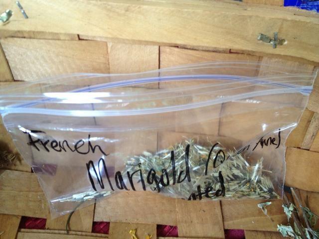 Deja la bolsa un poco abierta durante varias semanas para evitar el crecimiento de moho y la destrucción de las plantas de semillero futuras.