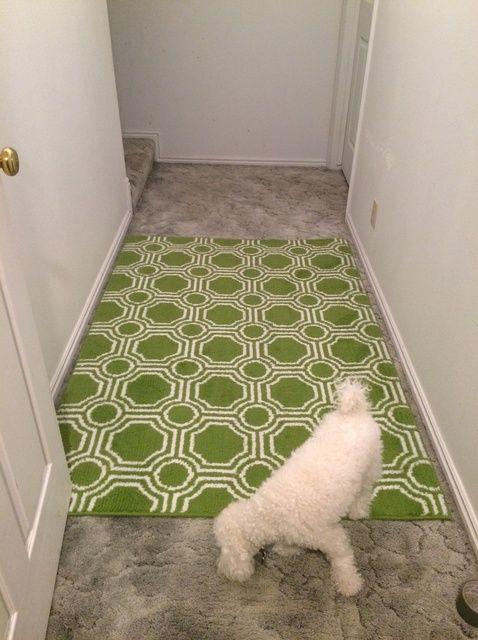 Fotografía - Cómo proteger una manta de área sobre la alfombra