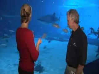 Nadar con los tiburones en el Acuario de Georgia