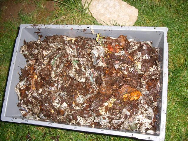 Un día o dos después de la adición de los gusanos, usted puede comenzar a enterrar los restos de comida vegetativas en la papelera. Use una pequeña pala de mano o las manos para cavar un agujero poco profundo en la ropa de cama y enterrar los residuos de alimentos.