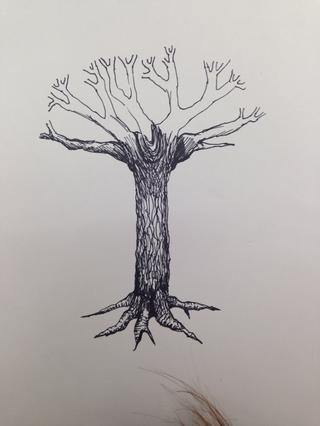 Eclosión Cruz se hace más evidente en la parte superior del árbol (donde sucede la mayor parte de sombreado).
