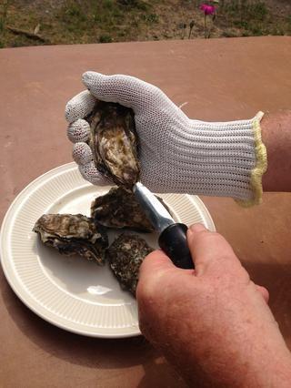 Ponte el guante y recoger una ostra. Coloque la ostra de modo que la mayor parte de la ostra es en la parte superior de su mano y la parte más pequeña se encuentra en la parte inferior. Coloque el cuchillo en la mano libre.