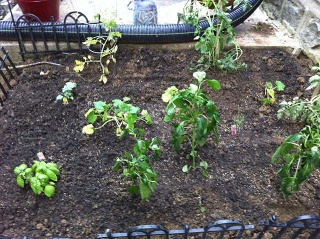 Cómo iniciar un jardín de verduras