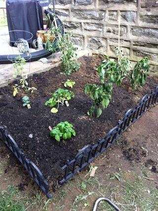 Después de un montón de excavación y sudoración Puse los nuevos en el suelo, así como las plantas anteriores. Esperemos que van a volver a la vida y nos proporcionan unas deliciosas verduras !!