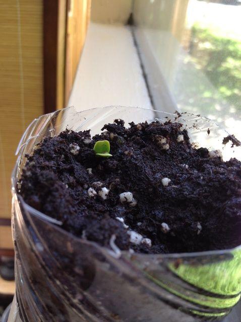 Fotografía - Cómo iniciar un Veggie y Herb Garden Desde BASURA!