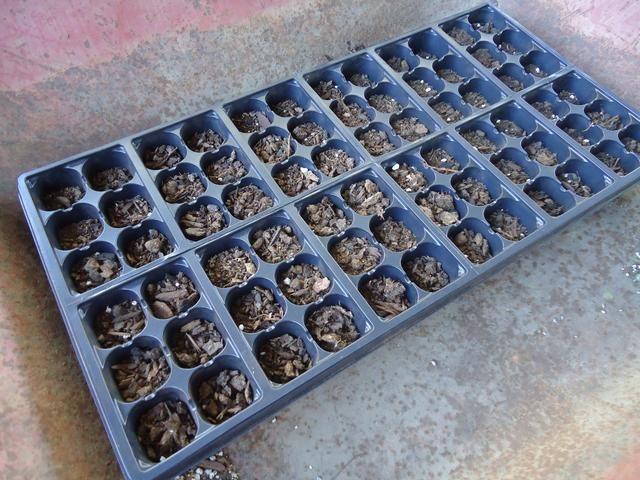 Ahora uniformemente llenar cada agujero con la mezcla de semillas de partida seleccionado. También se puede simplemente usar mezcla normal para macetas, si quieres. Yo uso un poco de ambas cosas, porque se me acabó.