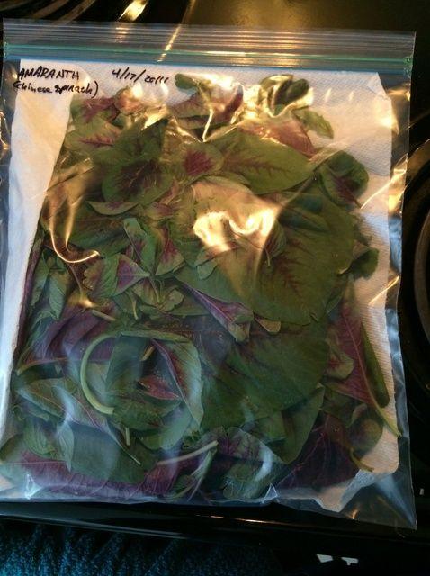 Forma de guardar amaranto (espinaca china) Receta