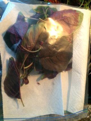 Cubra una bolsa de plástico con una toalla de papel ayuda captura el exceso de humedad y evitar su deterioro rápido.