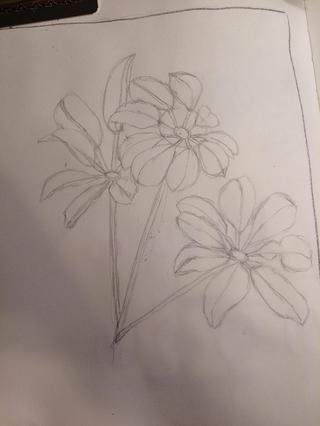 Empecé dibujando en mi revista de arte con un lápiz.