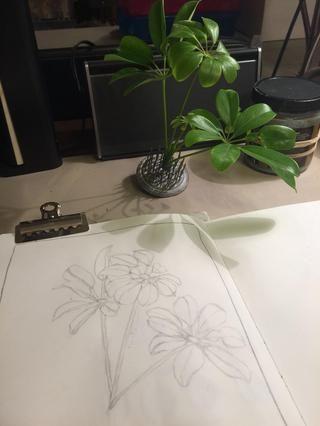 Porque yo recogí estas hojas de una planta desde el exterior, la esperanza de vida es limitado, así que tomé una foto de ella para hacer referencia una vez que han ido cojera.