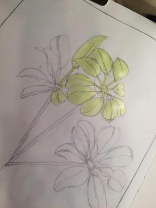 Empecé a pintar con limeaid Velvet porque ese era el color más claro que he encontrado en las hojas.