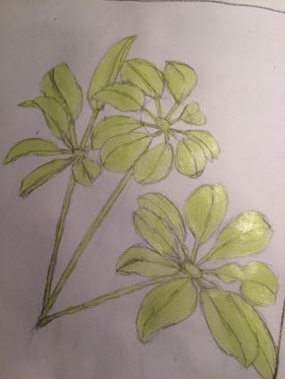 Una vez que tenía el color base pintada, me borró las líneas de lápiz de la mejor manera que pude.