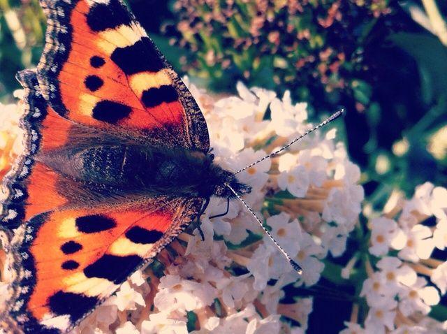 Fotografía - Cómo tomar hermosas Naturaleza Fotos
