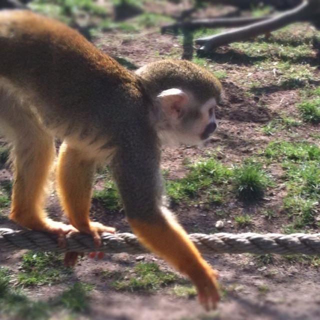 3. TIEMPO. El tiempo era todo en este tiro cuando visité un parque de safari año pasado. Este mono estaba un poco asustada por lo que puedo configurar mi cámara para hacer disparos rápidos y esperé pacientemente ... ??????