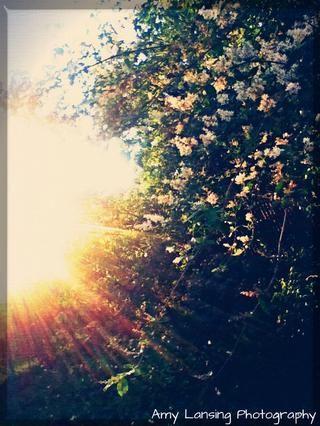El sol puede hacer o destruir una imagen. Trate de moverse y ver cómo utilizar a su ventaja. El sol es uno de los más increíbles. usarlo's beauty.