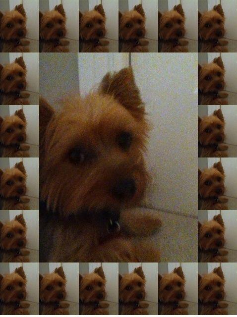 Fotografía - Cómo tomar la buena calidad de fotos de sus mascotas