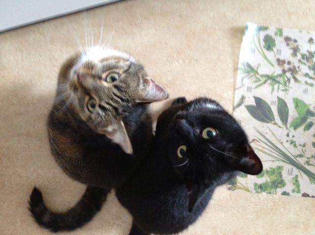 Cómo enseñar a tu gato trucos divertidos