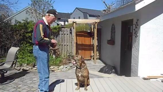 Entre en calor con una mirada hacia mi ejercicio. El ejercicio comienza con su perro sentado frente a usted y le mira. Muestre su perro un convite y llevarlo a la nariz diciendo vistazo a mí. Le recompensa