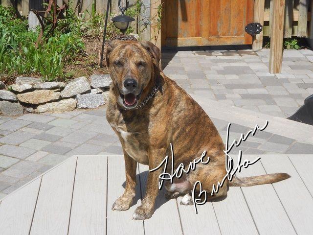 Con paciencia alguna práctica su perro puede aprender este truco. Vamos, tomar Bubba's advise and have some fun with your dog.