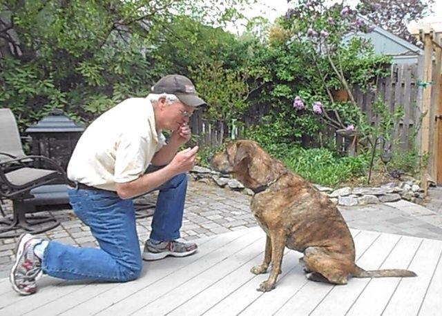 Para empezar, de rodillas delante de su perro llame a su nombre de los perros. A continuación, coloque un regalo (que comienza con una galleta) en la boca. Apunte a la boca y decir besos.