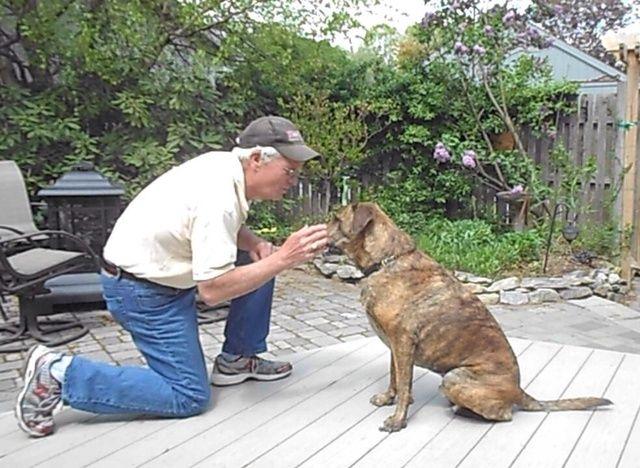 Cuando su perro se lleva la palma de tu boca alabar. Como el perro se pone mejor en tomar suavemente el placer hacerlo más pequeño. Finalmente eliminar el tratamiento y el uso de la señal con la mano (labio tacto).