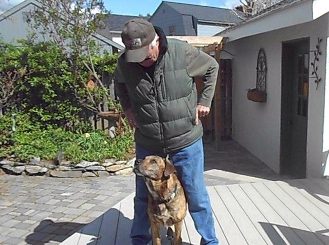 Fotografía - Cómo enseñar a su perro a jugar Peekaboo