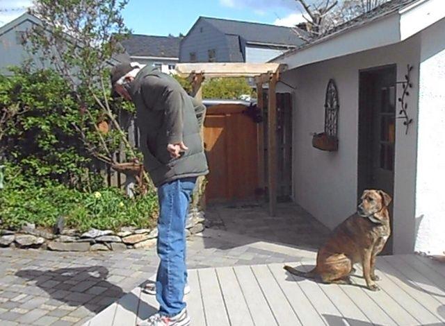 Introducir las señales de la mano (manos en caderas) una vez que su perro se mueve libremente debajo de ti. A medida que comienza a moverse en la señal de la mano de eliminar la señal y señuelo.
