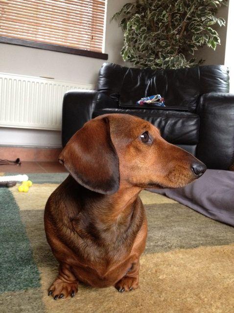 Fotografía - Cómo enseñar a su perro a darse la vuelta