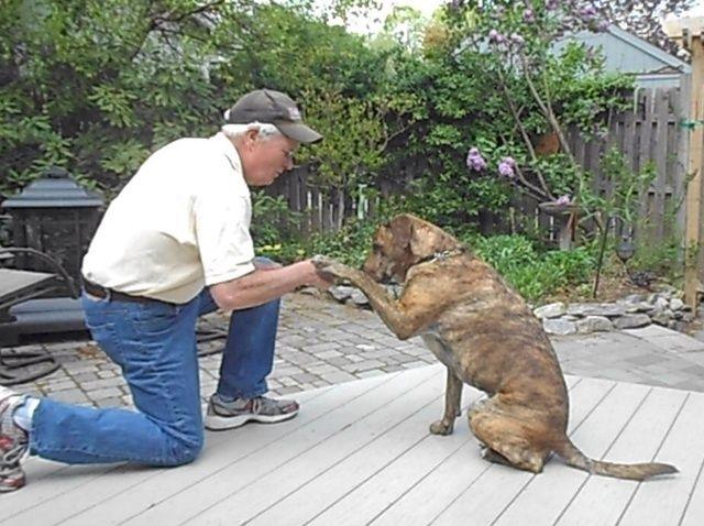 Fotografía - Cómo enseñar a su perro a sacudir las manos