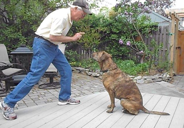 Haga que su perro se sienta en frente de usted y prestar atención. Siempre es una buena idea para entrar en calor con una mirada a mi ejercicio.