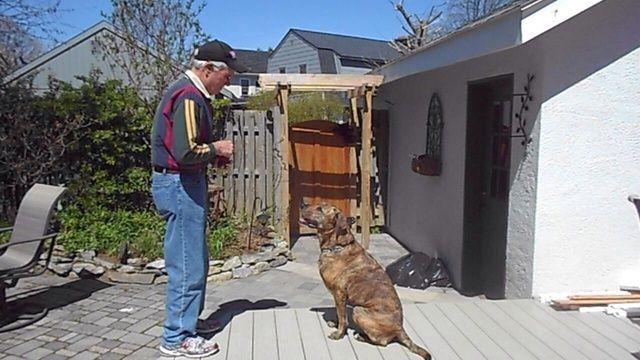 Es importante que su perro está prestando atención y haciendo contacto visual. Calientes Bubba con una mirada hacia mi ejercicio con una golosina.