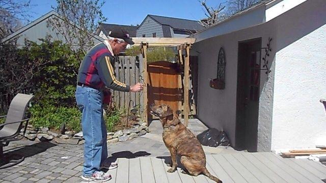 Para enseñar el giro que su perro se siente delante de usted y que le da su completa atención. Mantenga un convite delante de su nariz y se mueven en un movimiento sabio reloj contador de dar la orden de giro.