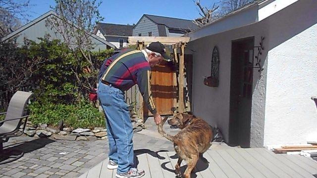 Cuando se completa el giro dará el placer y la recompensa verbal. Es importante mantener la golosina cerca de la nariz perros en el comienzo.