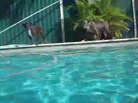 Diviértase con sus perros, pero mantener un ojo sobre ellos en todo momento en y alrededor del agua