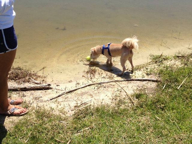 Es probable que se tenga que repetir el último paso un par de veces antes de que su perro lleva voluntariamente el paso, pero si su perro es como el mío, una vez que lo hace usted tendrá un tiempo difícil mantenerlo alejado del agua.