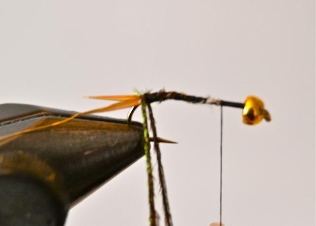 Empate en dos hebras de lance de pavo real en la parte frontal de la cola .... inmediatamente delante del hilo de oro y luego enrollar el hilo hacia delante un largo camino. Lo siento por el'blurry' picture here :-(