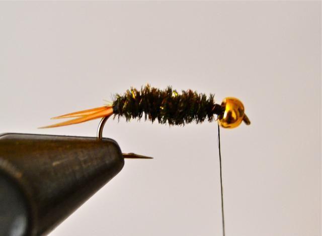 Ahora, envolver el alambre de oro fino hacia adelante sobre la parte superior del cuerpo lance pavo real de mantenimiento de las envolturas sobre 1.16 a 1.8 pulgada de distancia. Este tanto crea lo que parece ser segmentos del cuerpo y ayuda a mantener el lance sobre.