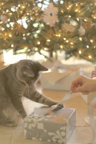 Deje que el gatito ayuda. Se le puede sorprender con sus habilidades de arco para empatar -)