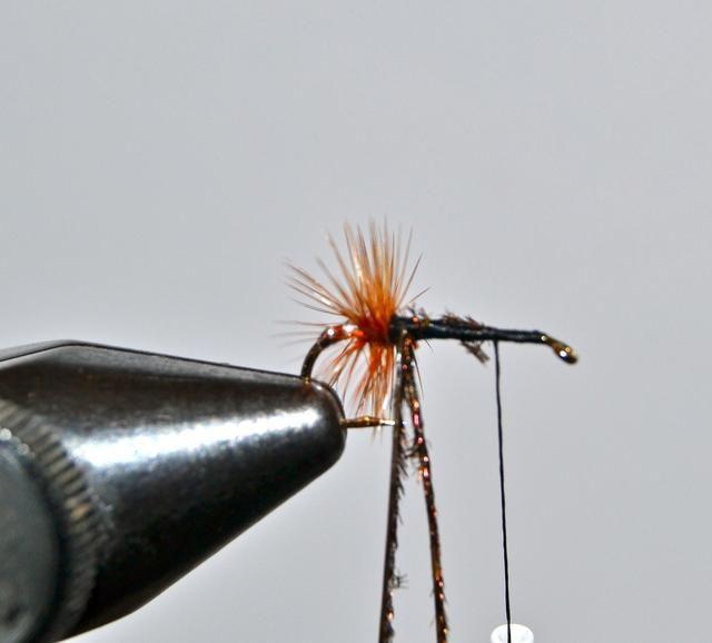 Empate en lance de pavo real con fuerza contra donde termina hackle marrones. (Algunas personas utilizan sólo una hebra de lance .... prefiero dos en la mayoría de los casos.)