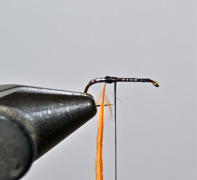 Empate en una sola hebra de hackle marrón un poco más allá, donde el eje endereza. En esta guía se utilizó un hackle marrón tamaño 14.