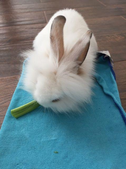 Cómo entrenar a un conejito