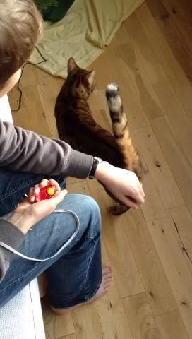 Sin cepillo todavía. Queremos que aprenda que sus acciones pueden causar un clic y tratar. Mantenga un dedo, haga clic / regalo para cualquier interacción. La mayoría de los gatos, al menos, olfatear, sobre todo si huele de golosinas.