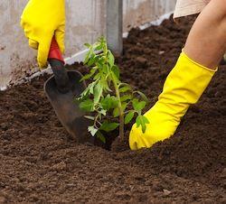 Trasplantar una planta - Herramienta de mano