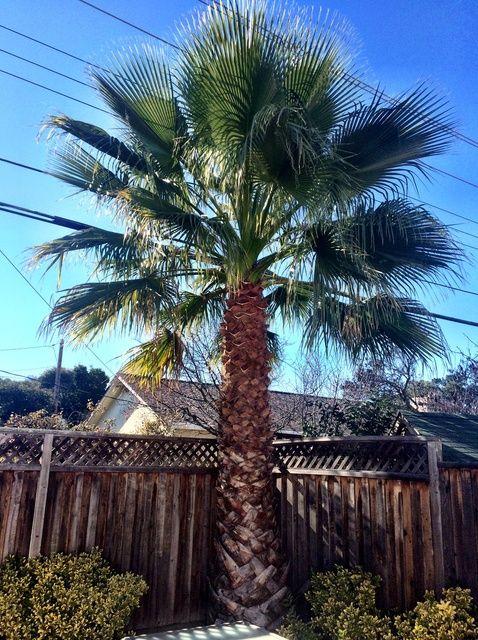 Fotografía - Cómo ajustar una palmera