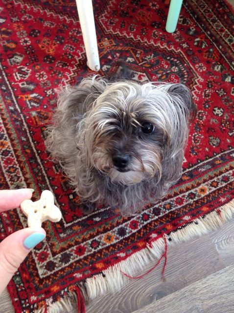 Cómo ajustar sus perros uñas en casa