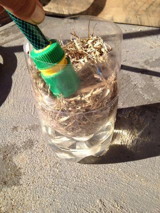 Llene la parte superior con azúcar de caña mantillo a continuación, añadir agua para llenar la base justo por encima del cuello de la sección insertada