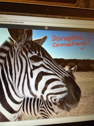 Profesor Ver: Imagen se selecciona (de computadora) y subido a InfuseDraw lienzo. Herramientas de anotación se pueden utilizar en la parte superior de la imagen.