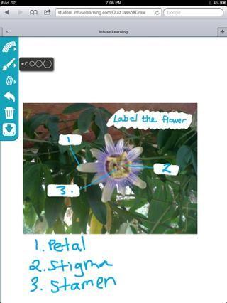 Estudiante Ver: Los estudiantes pueden utilizar InfuseDraw herramientas para demostrar el pensamiento y el aprendizaje y enviar la respuesta.